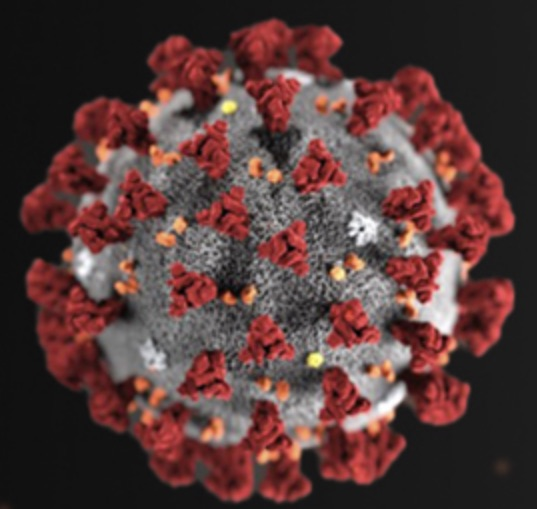 A detailed image of novel coronavirus